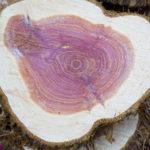 legno-di-rosa