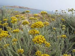 piante medicinali